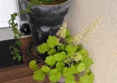 Dedans Dehors Metz Projet Jardin Paysager : Aménagement de jardin à l'avant d'une maison